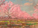 Peach orchard on Mavericks farm